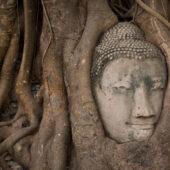 Cabeza atrapada por las raíces en Ayutthaya