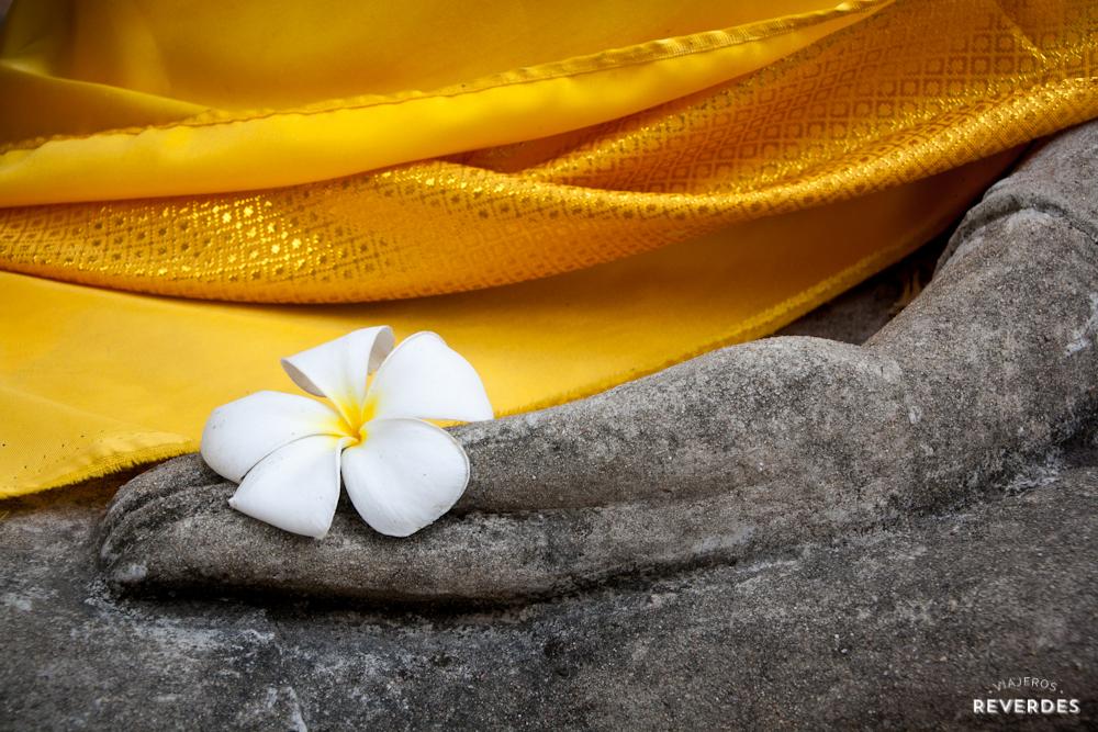 Plumería en mano de Buddha
