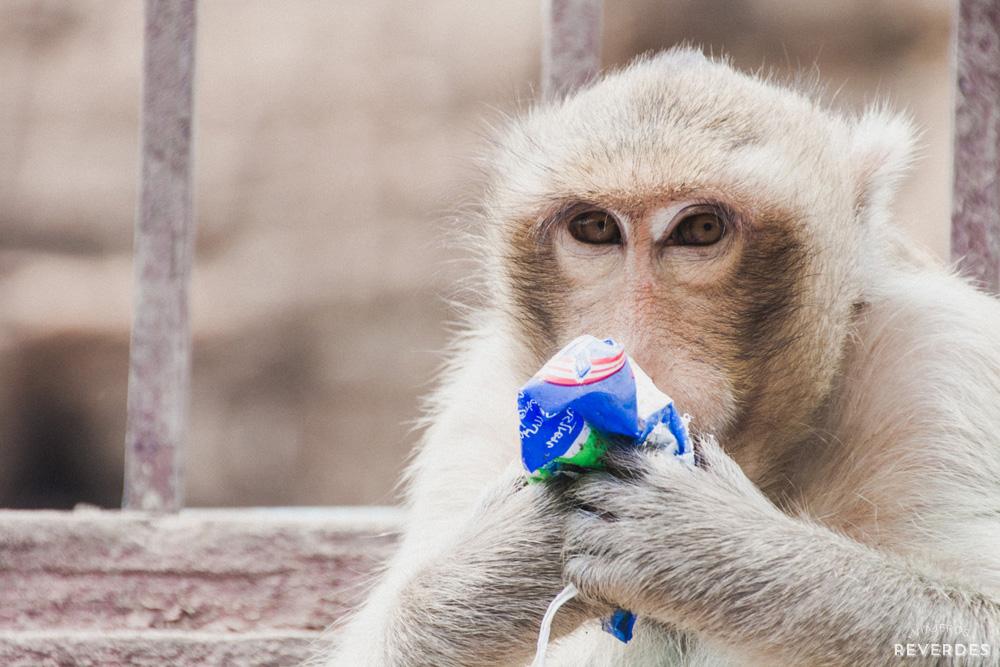 Mono bebiendo de un tetrabrick