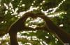 Corazón con luces