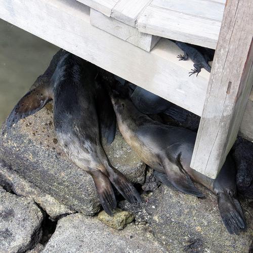 Animales Galápagos