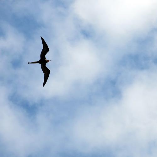 Cielo Galápagos