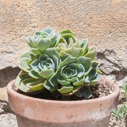 Plantas Toscana
