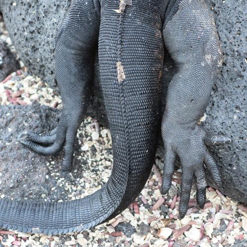 Texturas Galápagos